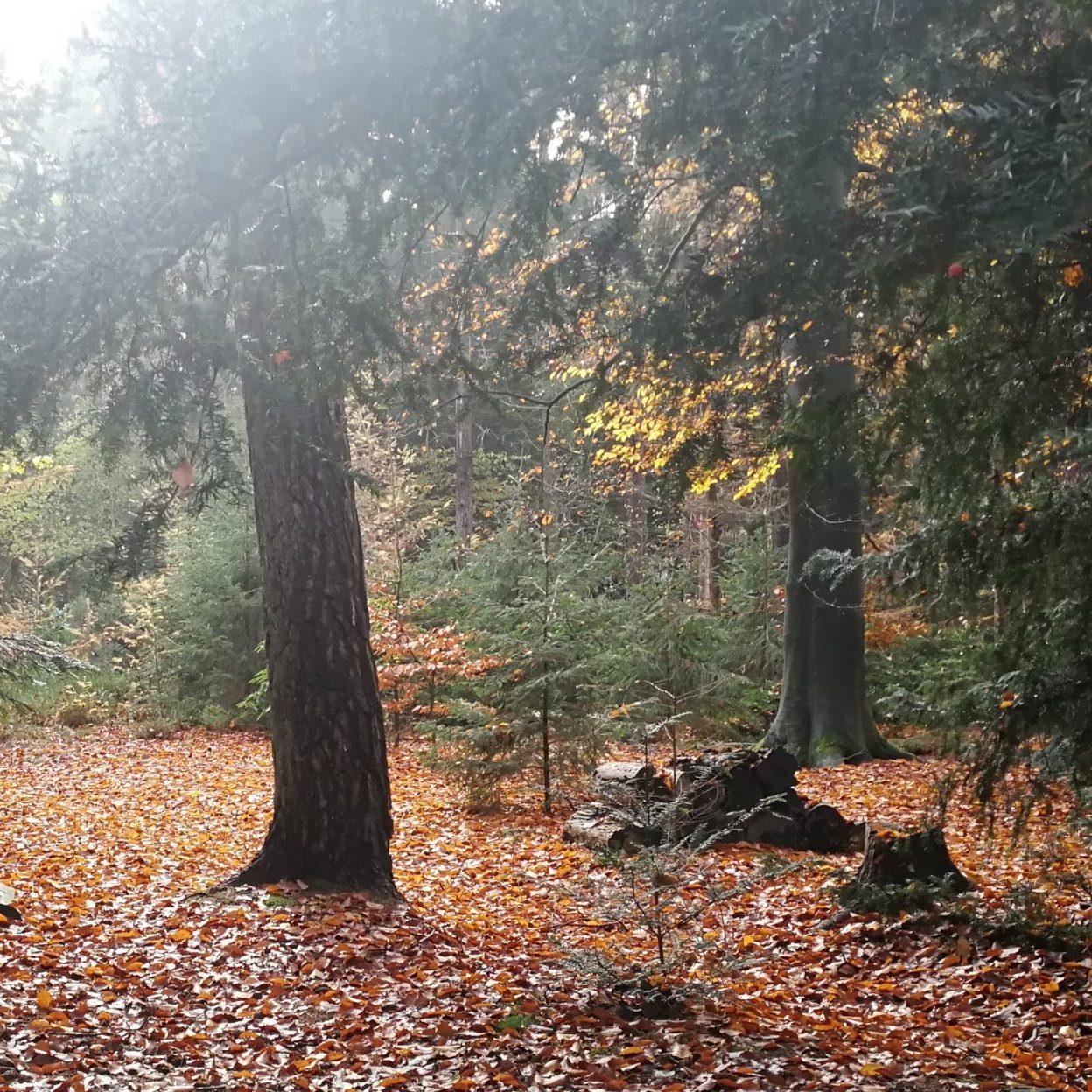 Herfst in het land